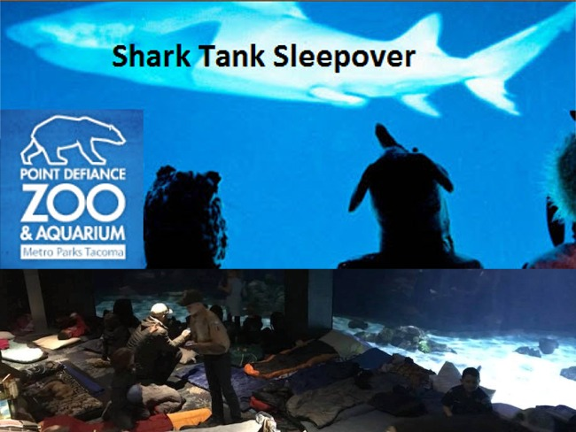 Shark Tank Sleepover at the Zoo - Sold Out!